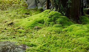 Zamiast trawnika: murawa bez koszenia