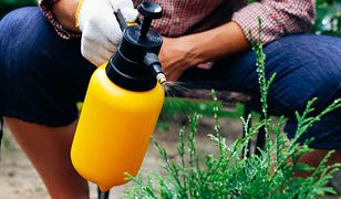 Jak chronić ogród bez chemii? Naturalne opryski na szkodniki i choroby roślin
