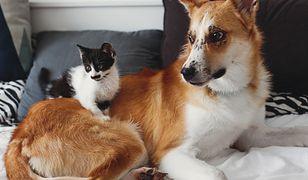 Domowe smaczki dla psa i kota. Z czego przygotować zdrowe przysmaki dla zwierząt?