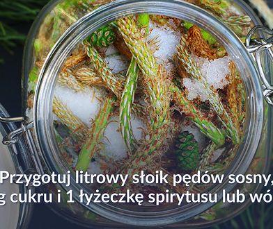 Jak zrobić syrop z młodych pędów sosny?