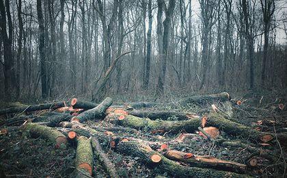 Kary za wycinkę drzew mniej dotkliwe. Nowe prawo weszło w życie