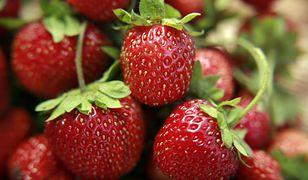 Plantatorzy truskawek nie mają w tym roku łatwego życia