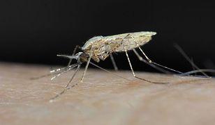 Hiszpańska drogówka ściga... komary