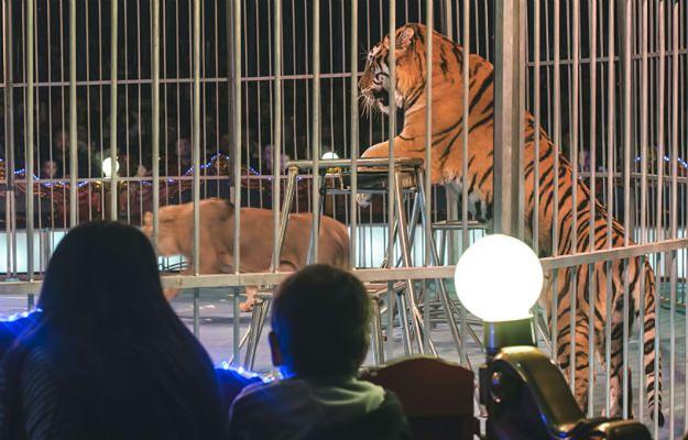 Starogardzcy radni będą wpuszczać tresowane zwierzęta do miasta. Petycja mieszkańców odrzucona