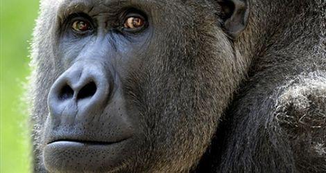 Małpi męski instynkt