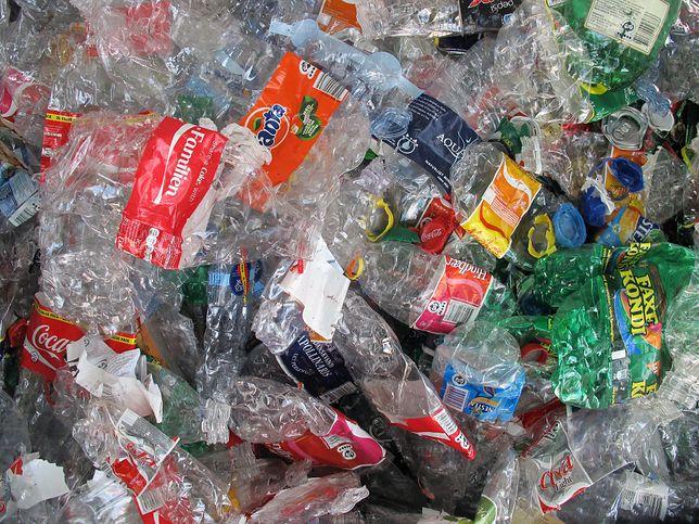 Grzyby pomogą w rozkładaniu plastiku?