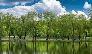 Śląsk. Najbardziej zielone miasta w Polsce? Pozycja Katowic zaskakuje
