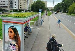Warszawa. Zielone przystanki. Trochę więcej tlenu i nowy raj dla owadów