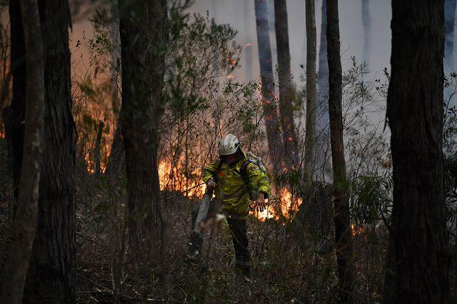 W pożarach w Australii zginęło pół miliarda zwierząt