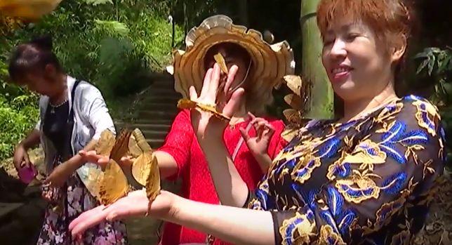 Motyle Królestwo  – chiński festiwal Duanwu trwa w najlepsze