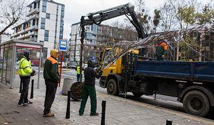 Warszawa. Kilka tysięcy nowych drzew w stolicy. W weekend sadzenie na Żoliborzu