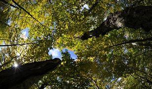 Eksperci widzą w lasach szansę na rozwój gospodarczy