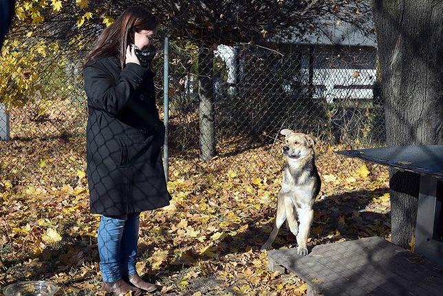"""Zatrudnili bezdomne psy. Jako """"urzędników"""" - zdjęcia"""