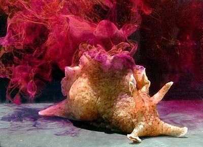 Do badań wykorzystano rzadki gatunek ślimaka - Alypsia California