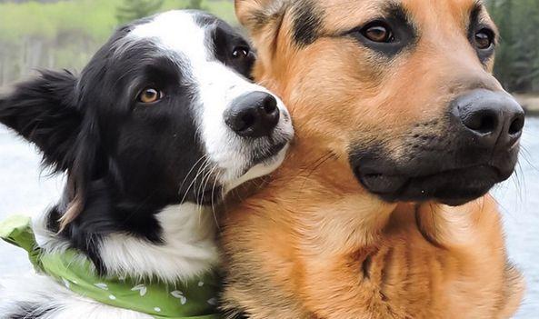 Dzisiaj Światowy Dzień Psa! Pochwalcie się swoimi pupilami
