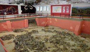 Kostenki 11 - krąg z kości ponad 60 mamutów.