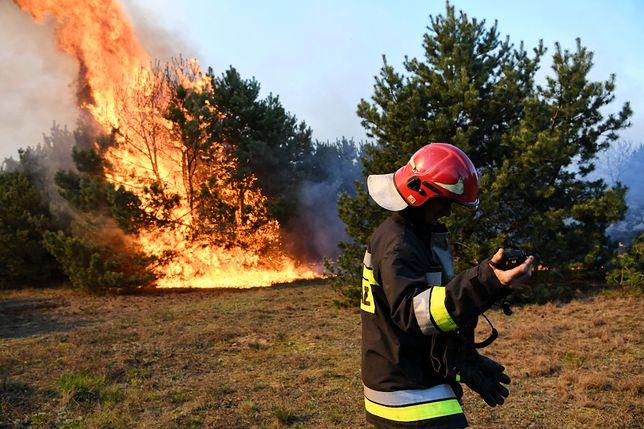 Najczęściej pożar lasu to wynik rozpalenia ogniska, grillowania, rzucenia niedopałka albo iskry od samochodu