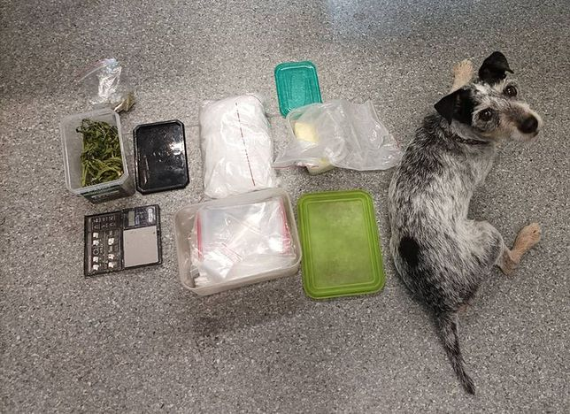 Pies Edek wraz z zabezpieczonymi narkotykami
