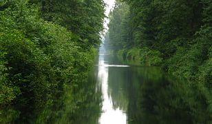 Kanał Augustowski na odcinku w okolicy jeziora Górczyckiego
