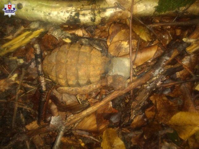 Grzyby. W lesie w województwie lubelskim znaleziono granat