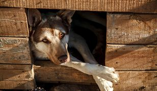 Pies uratował rodzinę. Sam nie przeżył tragedii