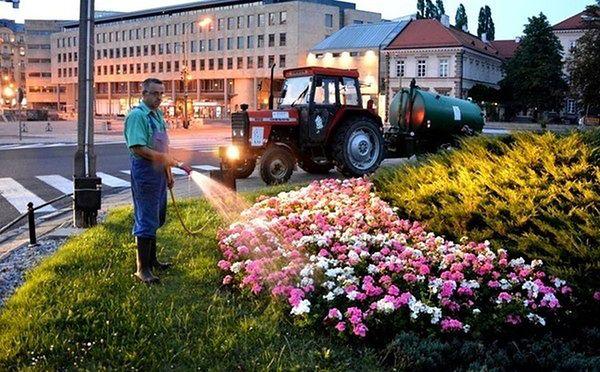 Miejskie rośliny podlewają nawet w nocy. Wszystko z powodu suszy