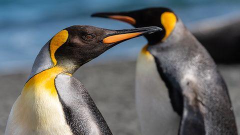 ExTiX 19.3 to pierwszy system oparty na jądrze Linux w wersji 5.0