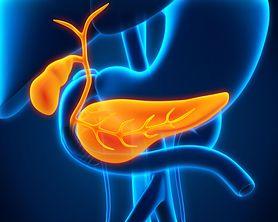Trzustka - budowa, położenie, funkcje, najczęstsze choroby, dieta