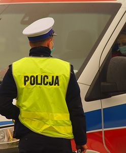 Łoś staranował auto na ulicy Włocławka