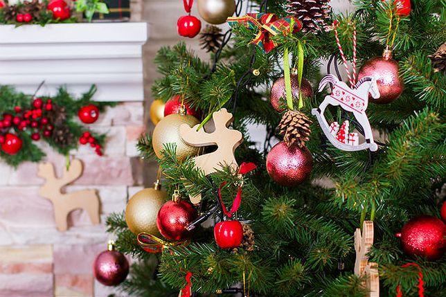 Co zrobić z choinką po świętach? Rusza akcja sadzenia drzewek w Krakowie