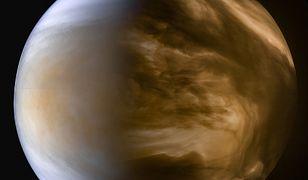Wenus posiadała klimat sprzyjający życiu.