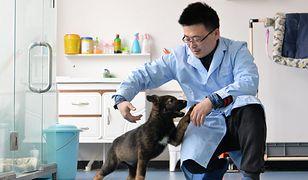 Sklonowany szczeniak ma być przyszłością psiej policji