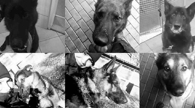 Warszawa. Umorzono śledztwo w sprawie śmierci 6 policyjnych psów