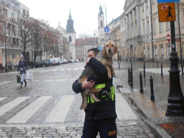 Warszawa. Strażnicy miejscy odnaleźli niedosłyszącego psa