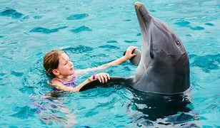 Z pływania z delfinami TripAdvisor zrezygnował już w 2017 r.
