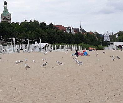 Plaża w Sopocie. Pogoda płata turystom figle. Zimno i wietrznie.