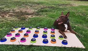 """Pies, który nauczył się """"mówić"""". Wideo pokazuje, jak komunikuje się z właścicielką"""