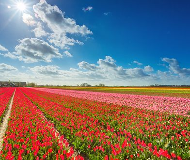 Napis zrobiono na polu kwitnących kwiatów. Zdjęcie ilustracyjne