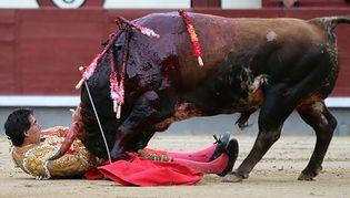 Trzech matadorów ciężko rannych. Tradycyjne widowisko przerwane pierwszy raz od 35 lat