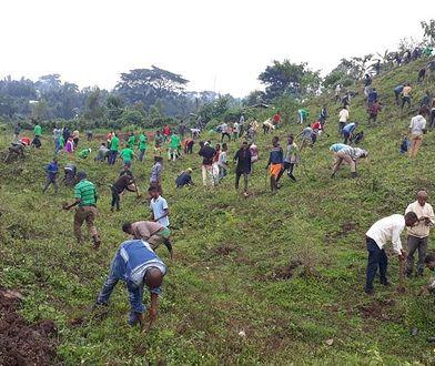 Etiopii udało się w poniedziałek pobić rekord liczby drzew posadzonych w ciągu jednego dnia