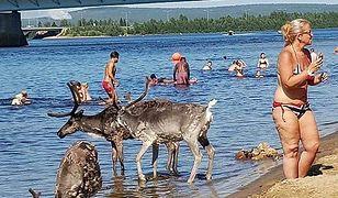 Upały skłaniają mieszkańców Finlandii do szukania orzeźwienia w wodzie
