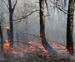 Susza 2020. Dramatyczna sytuacja w lasach. W tym roku może paść rekord pod względem liczby pożarów