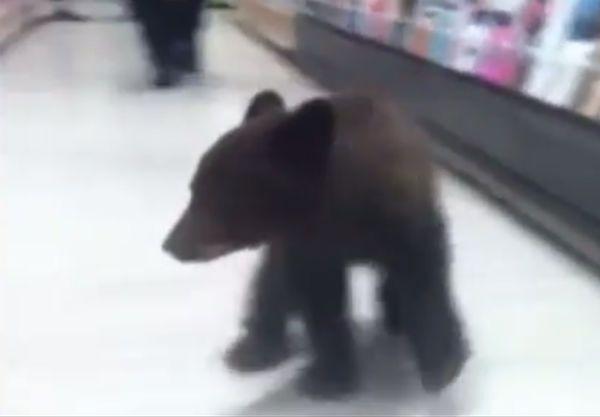 Niedźwiadek zabłądził w sklepie w Oregonie