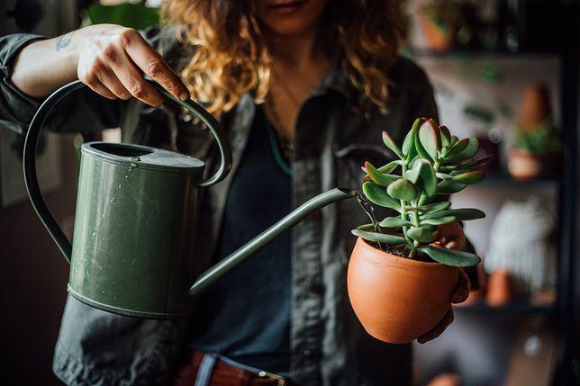 Triki ogrodnicze