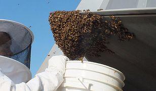 Amerykański myśliwiec uziemiony przez ogromny rój pszczół