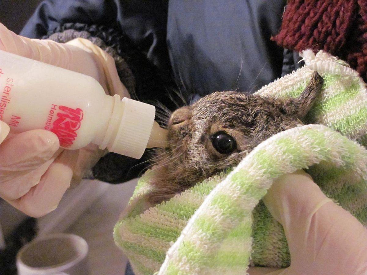 Warszawa. W ośrodku chore zwierzęta otrzymają niezbędną pomoc