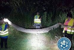 Nie tylko Polacy żyją wężem gigantem. Światowe media opisują poszukiwania pytona spod Warszawy