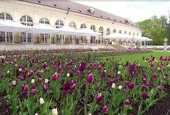 Holenderski Ogród Kwiatowy w Łazienkach [WIDEO]