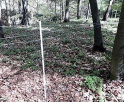 Rozciągnięte stalowe linki w lesie. Uważaj, to niebezpieczne pułapki