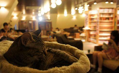 Hiszpania - kocia kawiarnia w Madrycie